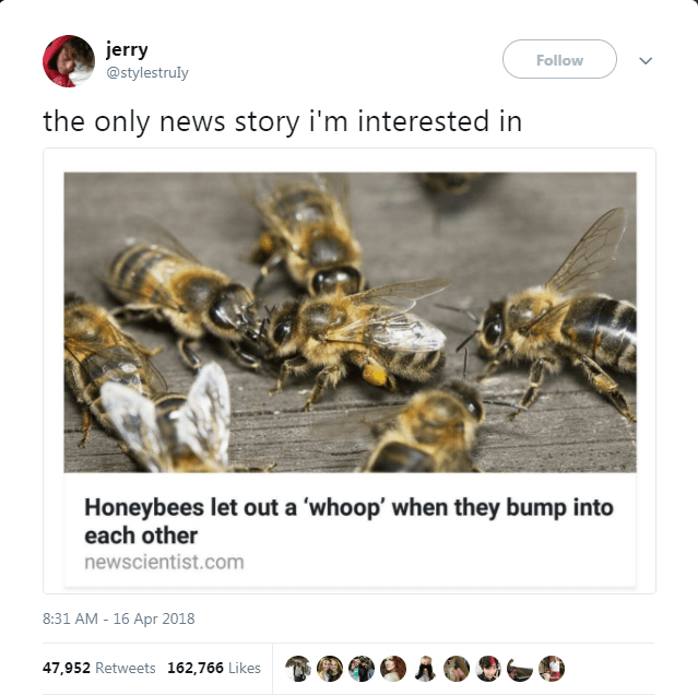 Bee - jerry Follow @stylestruly the only news story i'm interested in Honeybees let out a 'whoop' when they bump into each other newscientist.com 8:31 AM - 16 Apr 2018 47,952 Retweets 162,766 Likes