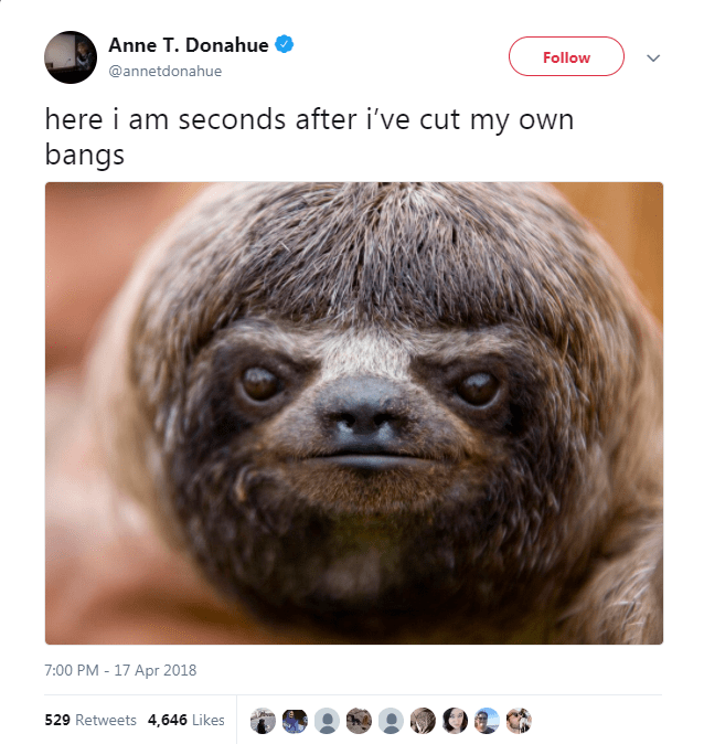 Three-toed sloth - Anne T. Donahue Follow @annetdonahue here i am seconds after i've cut my own bangs 7:00 PM - 17 Apr 2018 529 Retweets 4,646 Likes