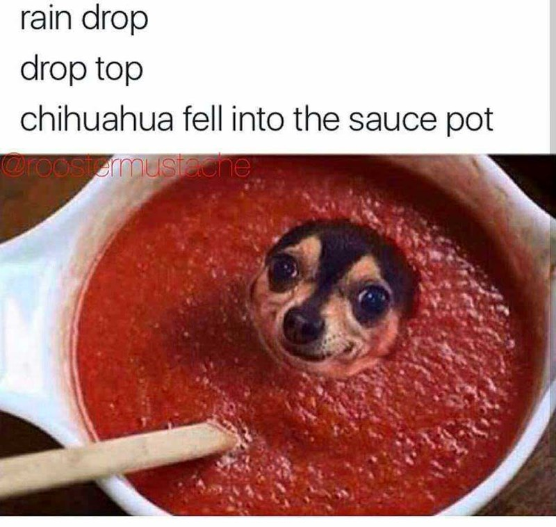 Food - rain drop drop top chihuahua fell into the sauce pot Oroosiemusiecne