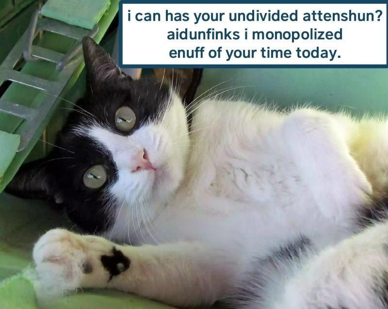 cat needy cat memes - 9153992704