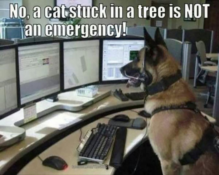 dog memes - dog meme of a dog at a 911 call center saying a cat stuck in a tree is not an emergency