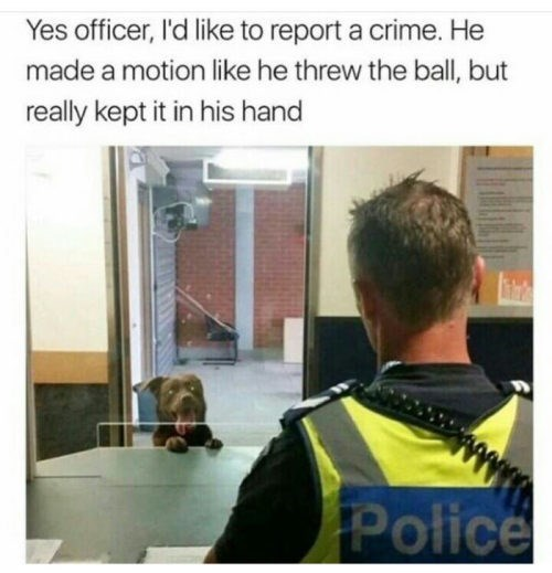 dog meme of a dog reporting to the police that a person pretended to throw a ball