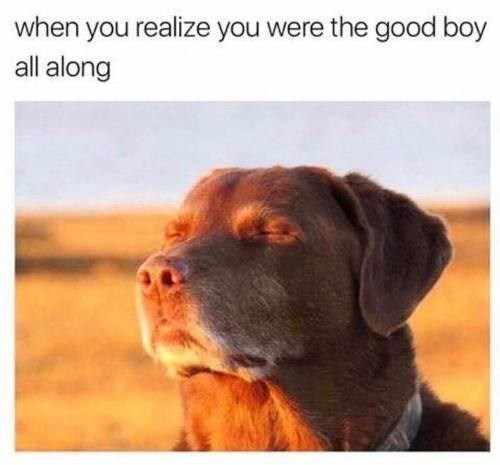 dog meme of a dog closing his eyes in the middle of a field after realizing he is a good boy