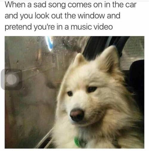 dog meme of a dog sitting in a car against a window and comparing it to listening to a sad song
