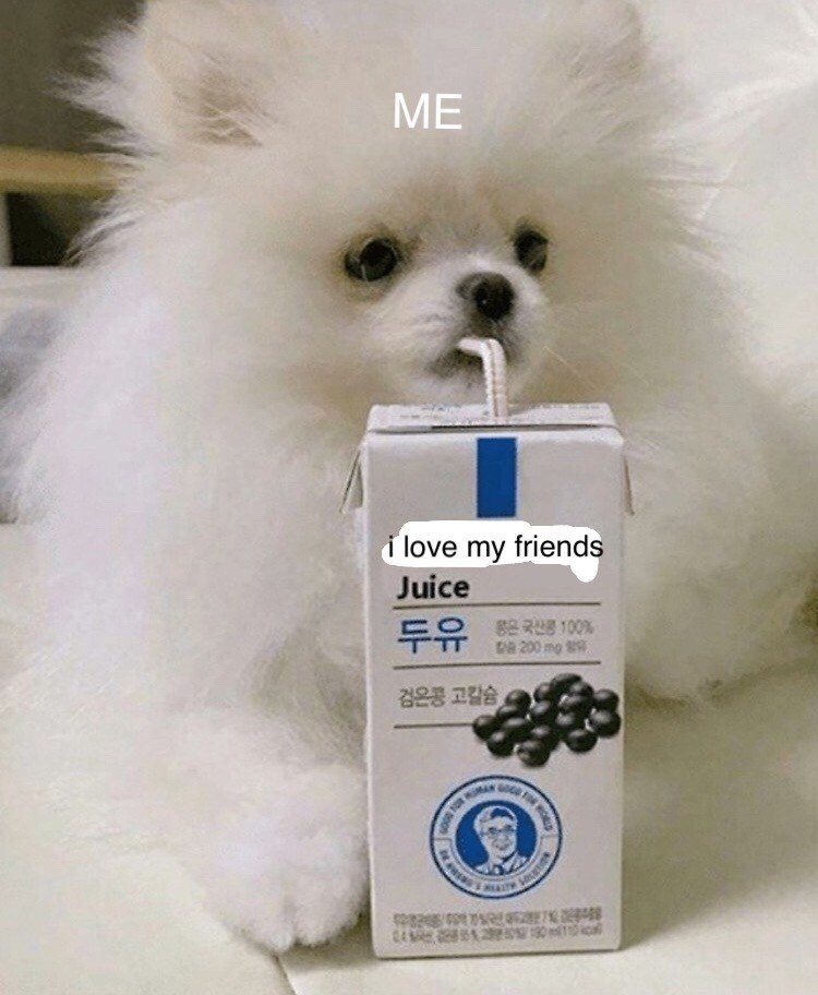 "dog meme with a Pomeranian drinking a juice with a straw that is called ""I love my friends"""