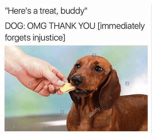 dog meme getting a treat and forgetting anything it was upset about