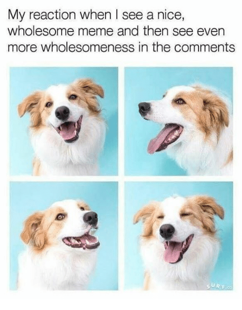 dog meme of a dog looking happy about seeing wholesome memes and comments