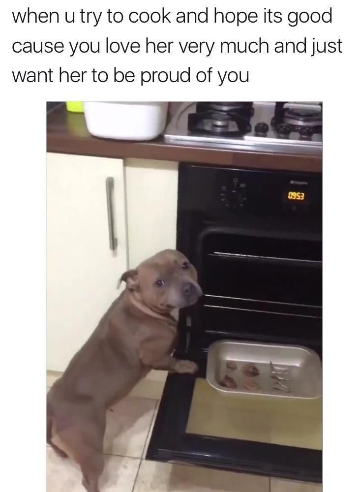 dog meme standing next to an open oven with a tray of food
