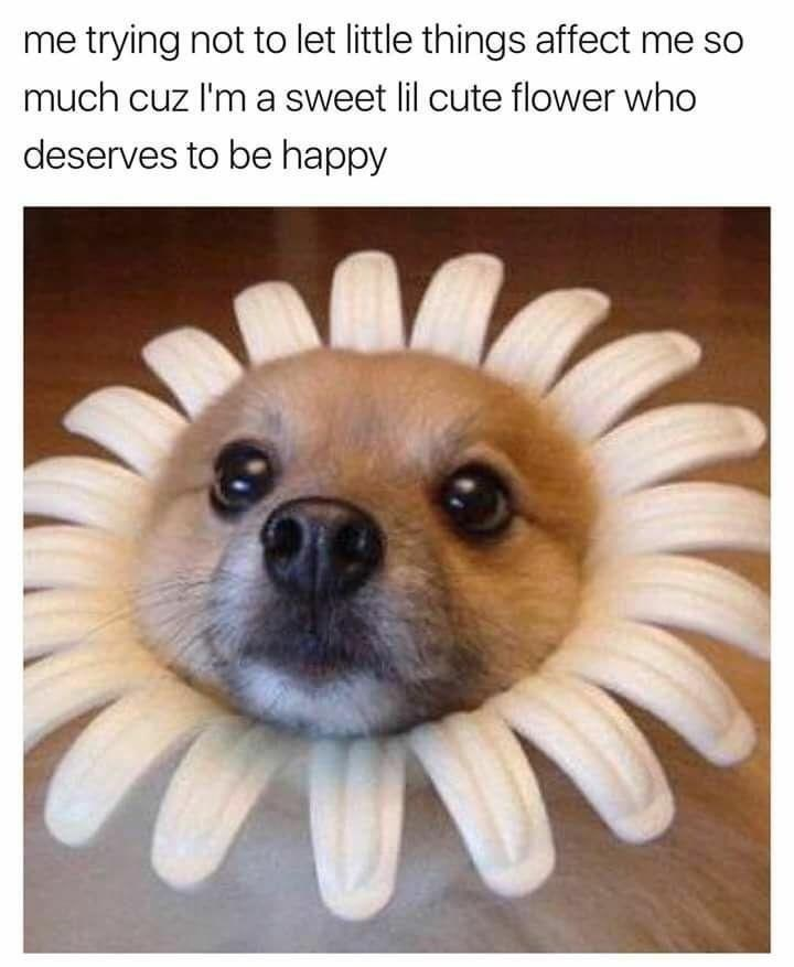 dog meme of a dog wearing a flower costume around its head