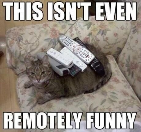 Cat - THIS ISN'T EVEN REMOTELY FUNNY