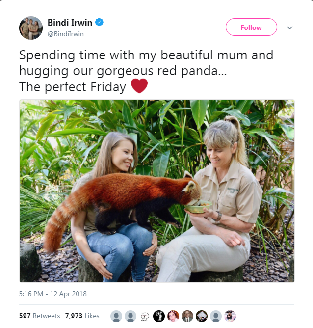 Adaptation - Bindi Irwin Follow @Bindilrwin Spending time with my beautiful mum and hugging our gorgeous red panda... The perfect Friday 5:16 PM - 12 Apr 2018 ESAT 597 Retweets 7,973 Likes