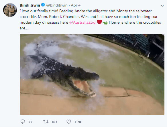 Sea turtle - @Bindilrwin Apr 4 Bindi Irwin I love our family time! Feeding Andre the alligator and Monty the saltwater crocodile. Mum, Robert, Chandler, Wes and I all have so much fun feeding our modern day dinosaurs here @AustraliaZoo Home is where the crocodiles ar... t 163 22 1.7K