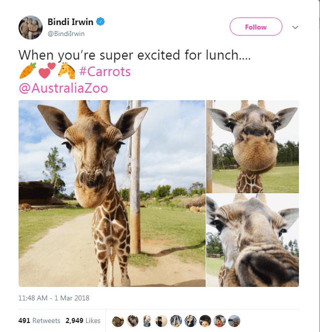 Giraffe - Bindi Irwin Follow @Bindilrwin When you're super excited for lunch.... #Carrots @AustraliaZoo 11:48 AM 1 Mar 2018 491 Retweets 2,949 Likes