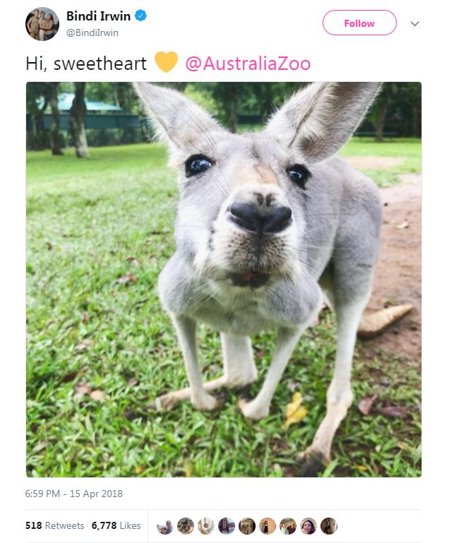 Mammal - Bindi Irwin Follow @Bindilrwin Hi, sweetheart @AustraliaZoo 6:59 PM - 15 Apr 2018 518 Retweets 6,778 Likes