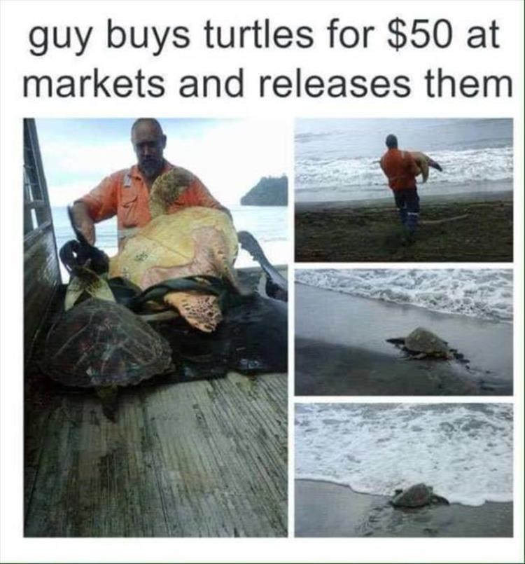 Adaptation - guy buys turtles for $50 at markets and releases them