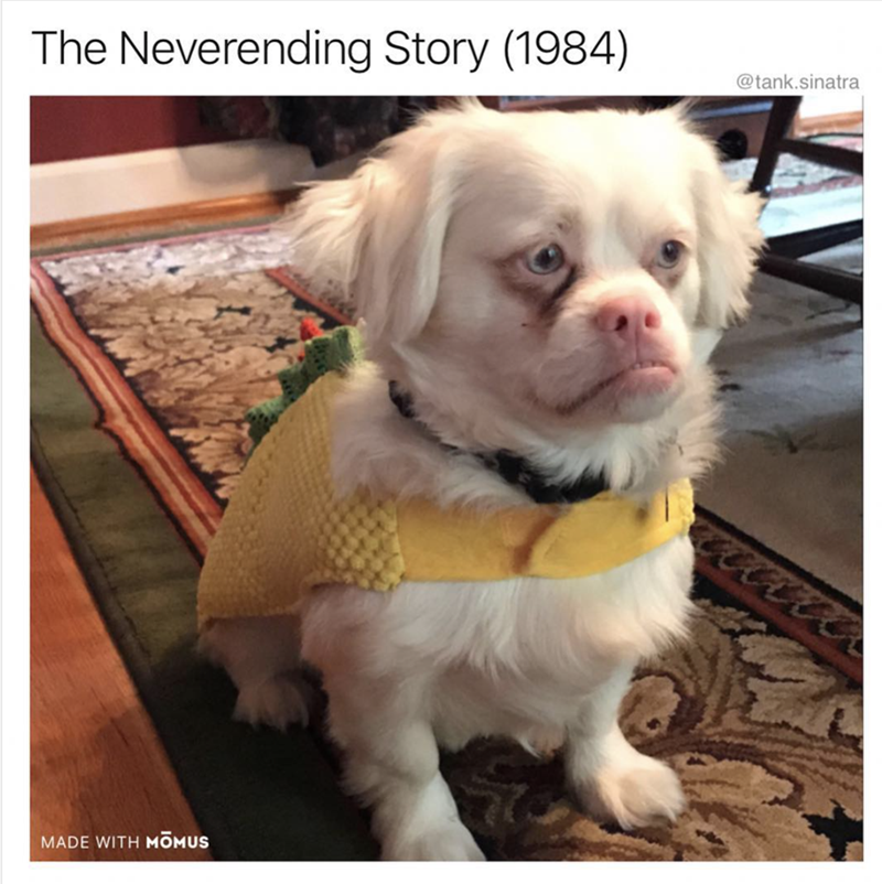 Dog - The Neverending Story (1984) @tank.sinatra MADE WITH MOMUS