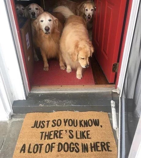 "Five golden retrievers standing in front of a doormat that says ""just so you know, there's like a lot of dogs in here"""