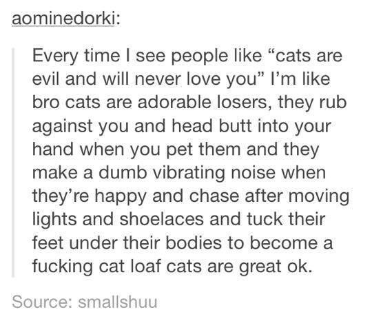 """funny tumblr post : Every time I see people like """"cats are evil and will never love you"""" I'm like bro cats are adorable losers, they rub against you and head butt into your hand when you pet them and they make a dumb vibrating noise when they're happy and chase after moving lights and shoelaces and tuck their feet under their bodies to become fucking cat loaf cats are great ok. Source: smallshuu"""