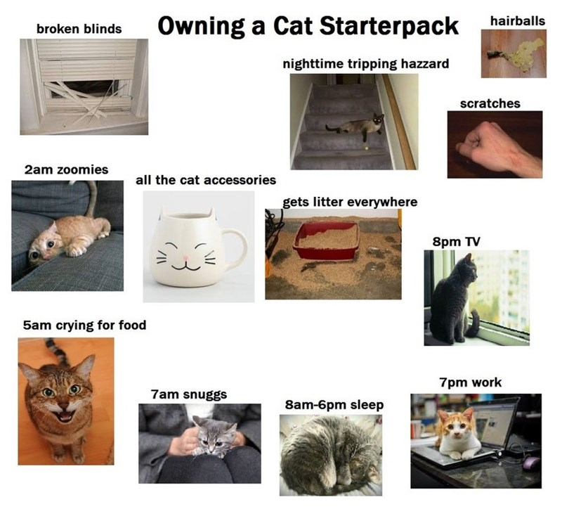 starter pack for people who own cats