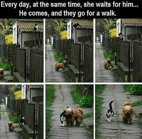 Animal shelter - Every day, at the same time, she waits for him... He comes, and they go for a walk.