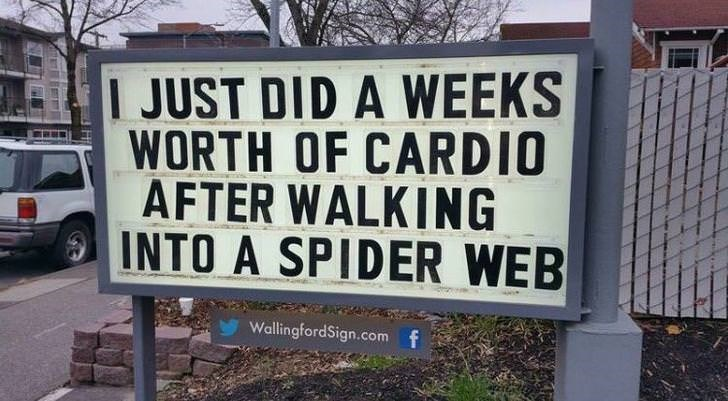 Text - I JUST DID A WEEKS WORTH OF CARDIO AFTER WALKING INTO A SPIDER WEB WallingfordSign.com f