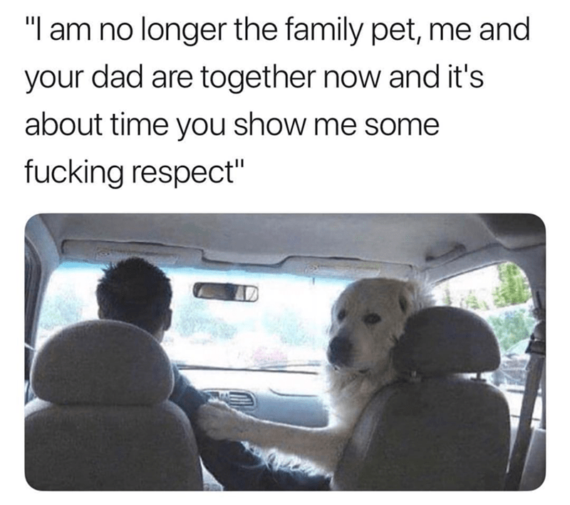 Dog sitting in the front seat looking back at the kids