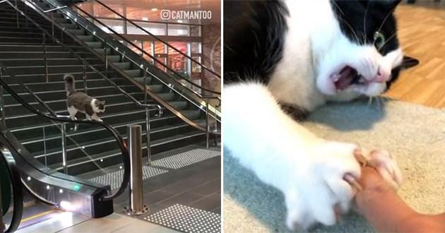 cats videos cute funny