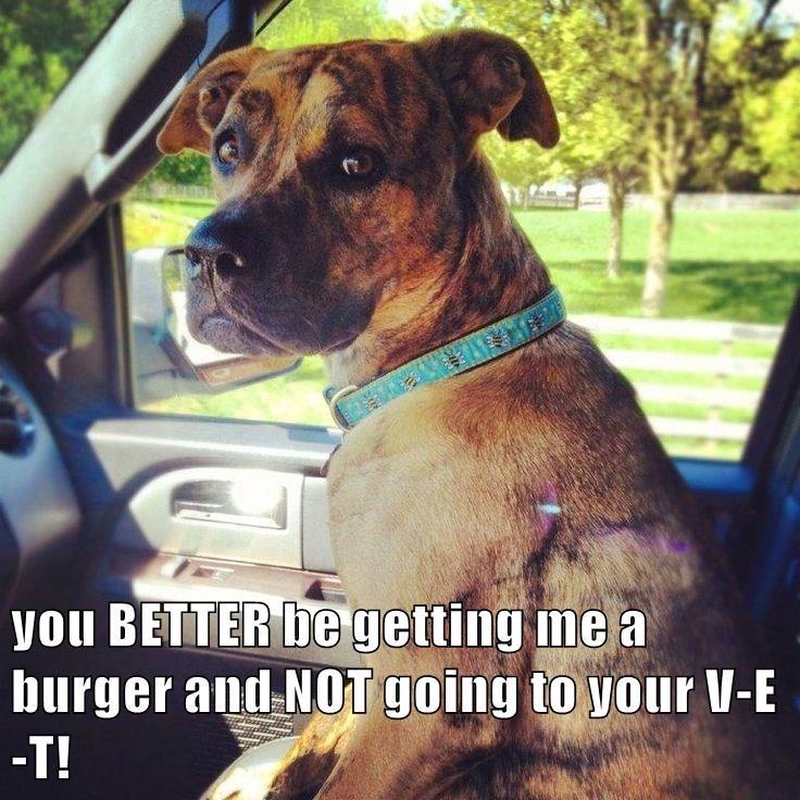 Cheezburger Image 9156598016