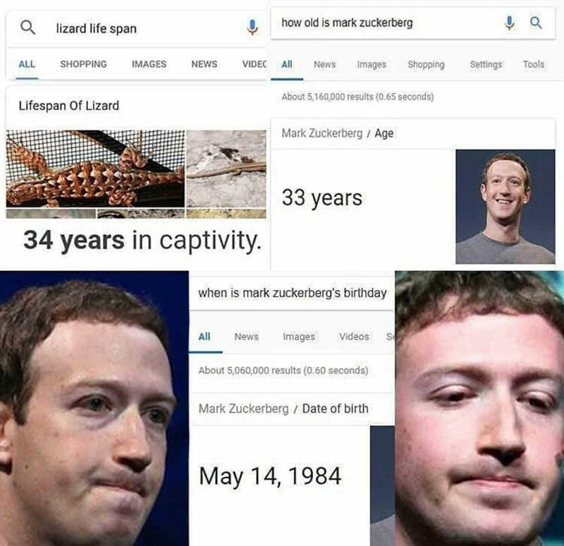 Google search listing Mark Zuckerberg's birthday, implying that he is a lizard in captivity