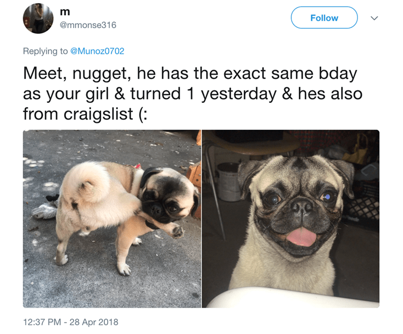Dog - m Follow @mmonse316 Replying to @Munoz0702 Meet, nugget, he has the exact same bday as your girl & turned 1 yesterday & hes also from craigslist (: 12:37 PM 28 Apr 2018