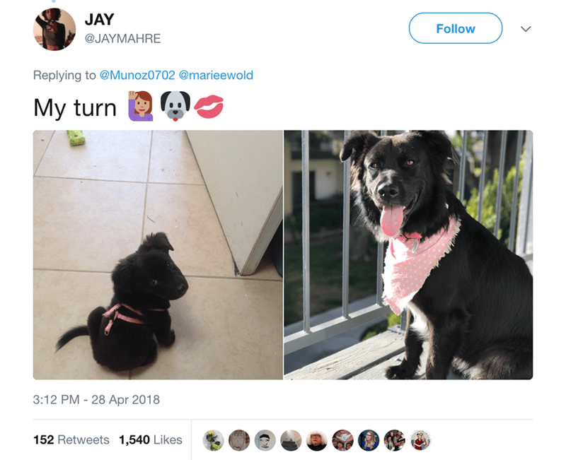Dog - JAY Follow @JAYMAHRE Replying to @Munoz0702 @marieewold My turn 3:12 PM - 28 Apr 2018 152 Retweets 1,540 Likes