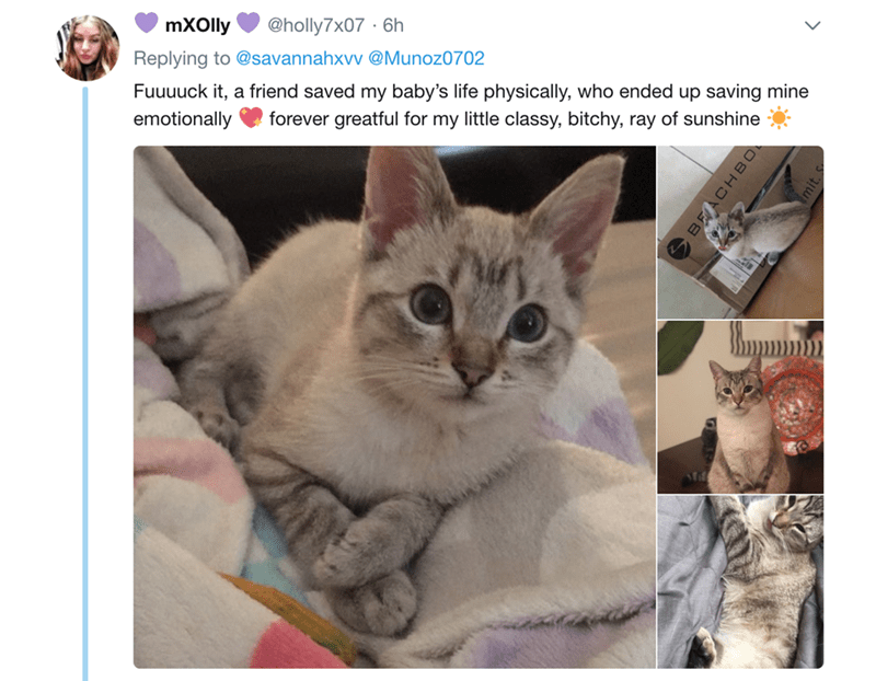 Cat - mXOlly @holly7x07 6h Replying to @savannahxvv @Munoz0702 Fuuuuck it, a friend saved my baby's life physically, who ended up saving mine emotionally forever greatful for my little classy, bitchy, ray of sunshine BEACHBO