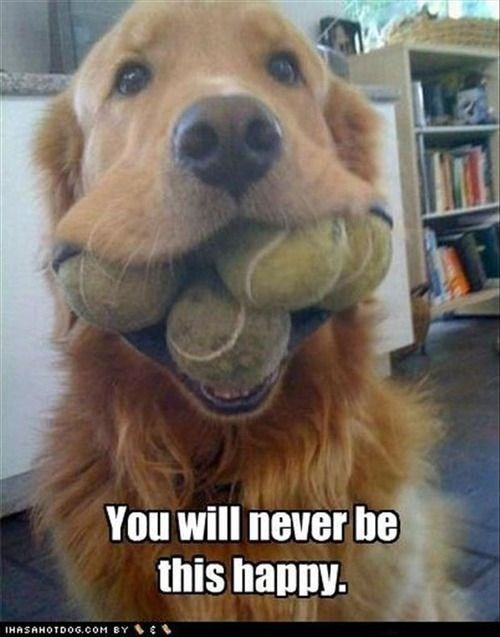 dogs playing fetch - Dog breed - You will never be this happy. IHASAHOTDOG.COM BY