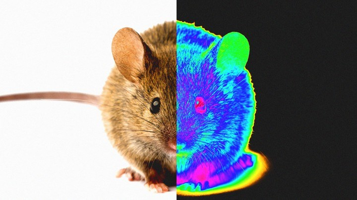 Scientists give mice the ability to see in the dark through injecting nano-particles into their eyes, with no side affects before during or after.