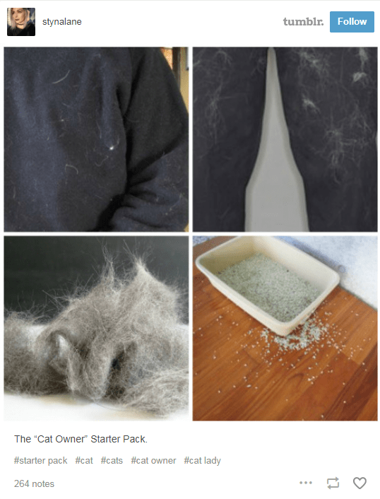 pictures of fur on clothes and kitty litter all over floor cat owner starter pack
