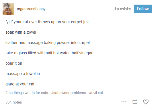text from tumblr if your cat throws up on your carpet