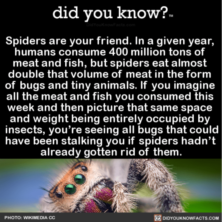 Insect - did you know? DidYouKnowFacto.com Spiders are your friend. In a given year, humans consume 400 million tons of meat and fish, but spiders eat almost double that volume of meat in the form of bugs and tiny animals. If you imagine all the meat and fish you consumed this week and then picture that same space and weight being entirely occupied by insects, you're seeing all bugs that could have been stalking you if spiders hadn't already gotten rid of them. PHOTO: WIKIME DIA CC DIDYOUKNOWFAC