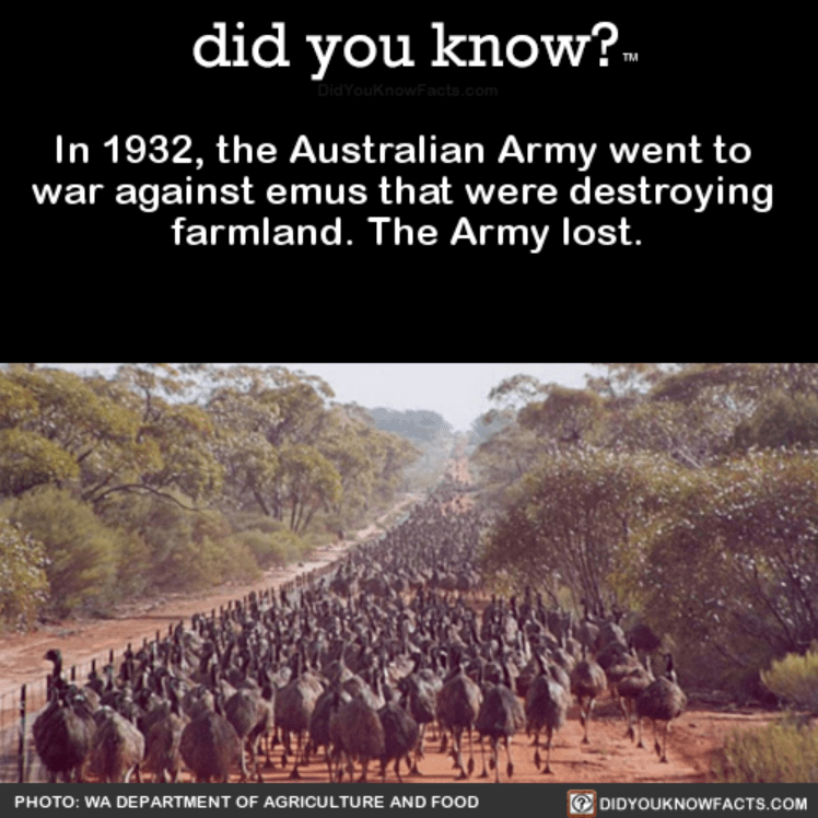 Text - did you know? DidYouKnowFacts.com In 1932, the Australian Army went to war against emus that were destroying farmland. The Army lost. DIDYOUKNOWFACTS.COM PHOTO: WA DEPARTMENT OF AGRICULTURE AND FOOD