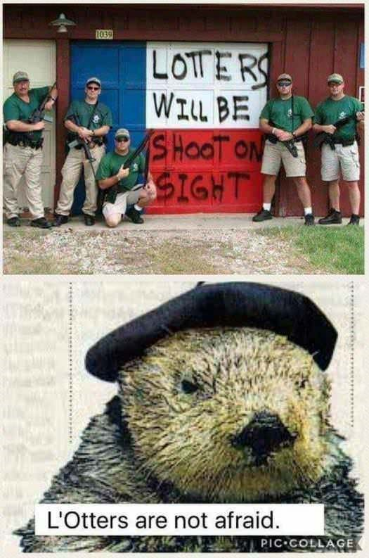 Groundhog - 1039 LOTERS WILL BE SHOOT ON SIGHT L'Otters are not afraid. PIC COLLAGE