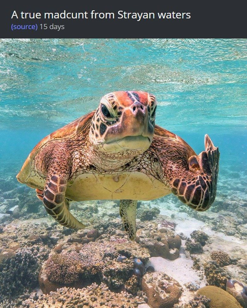 Photo of a turtle flipping off the camera