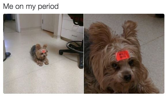 meme - Dog - Me on my period WILL SITE