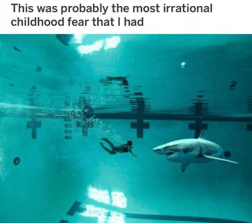 Photo of someone swimming with a shark in a swimming pool