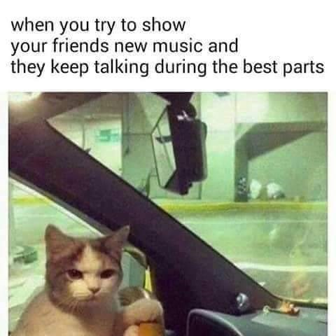 cat meme - Cat - when you try to show your friends new music and they keep talking during the best parts