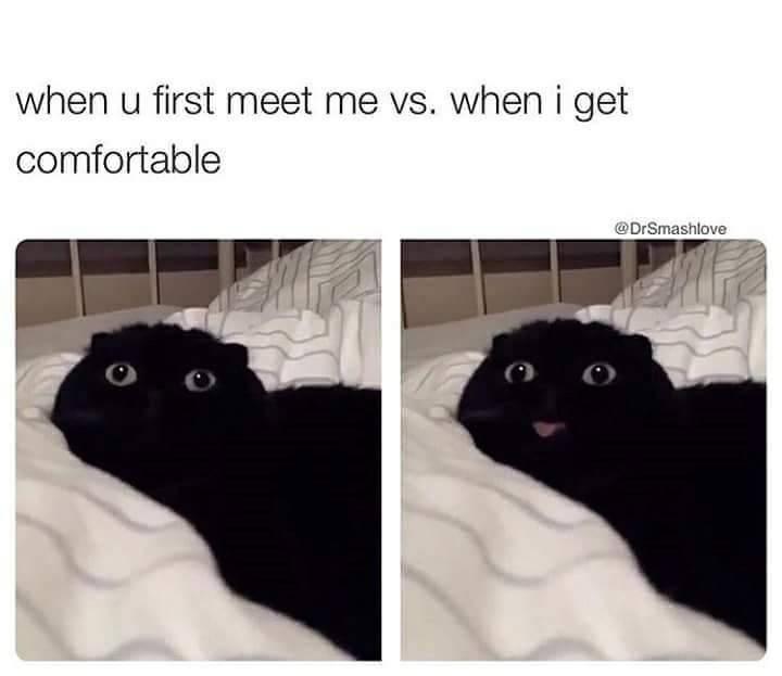 cat meme - Black cat - when u first meet me vs. wheni get comfortable @DrSmashlove