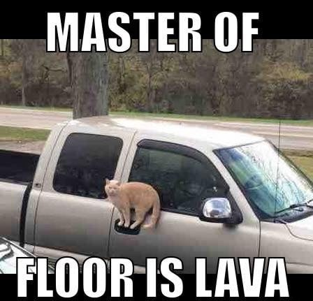 cat meme - Motor vehicle - MASTER OF FLOOR IS LAVA