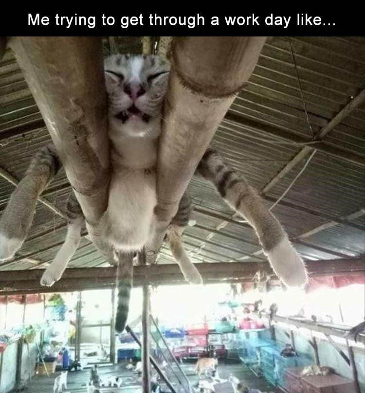 cat meme - Cat - Me trying to get through a work day like...