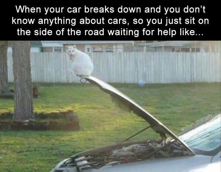 cat meme - Vehicle door - When your car breaks down and you don't know anything about cars, so you just sit on the side of the road waiting for help like... atatum strangey