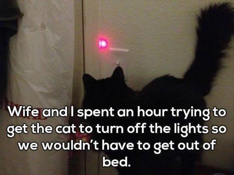 cat meme - Cat - Wife and I spent an hour trying to get the cat to turn off the lights so we wouldn't have to get out of bed.