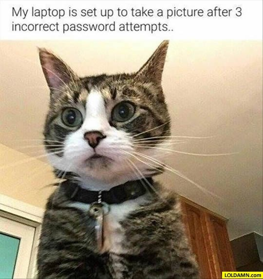 cat meme - Cat - My laptop is set up to take a picture after 3 incorrect password attempts. LOLDAMN.com