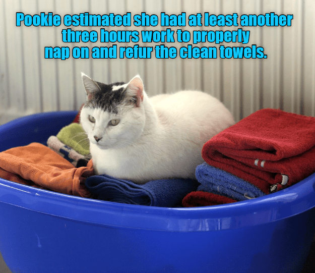 white cat with dark spots on head sitting in a basket of folded laundry